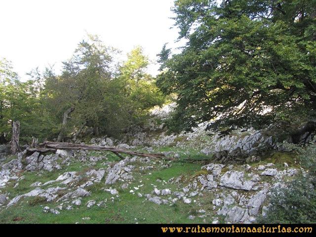 Ruta Ercina, Verdilluenga, Punta Gregoriana, Cabrones: Bosque de las Reblagas