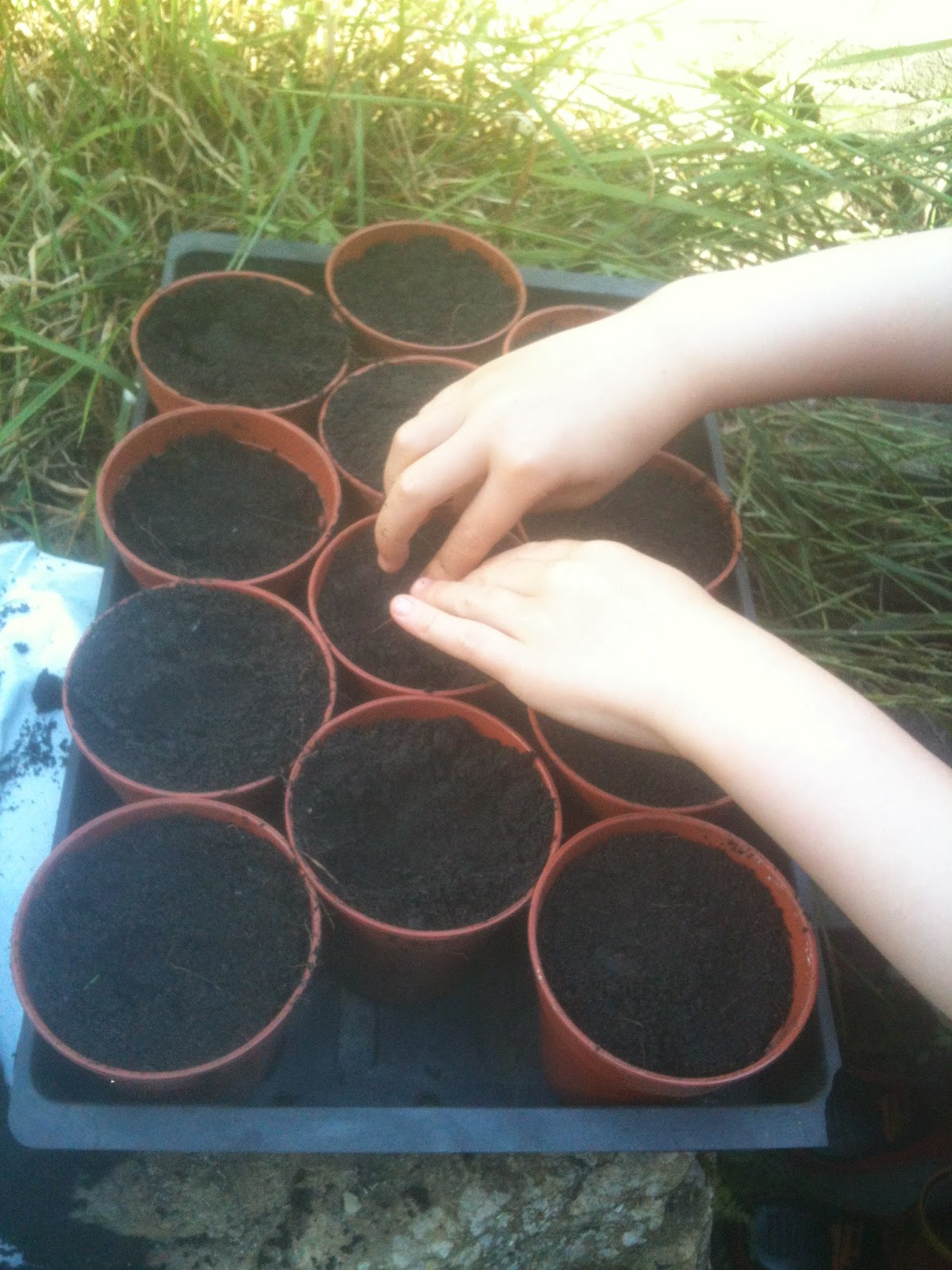 Sowing beans with children