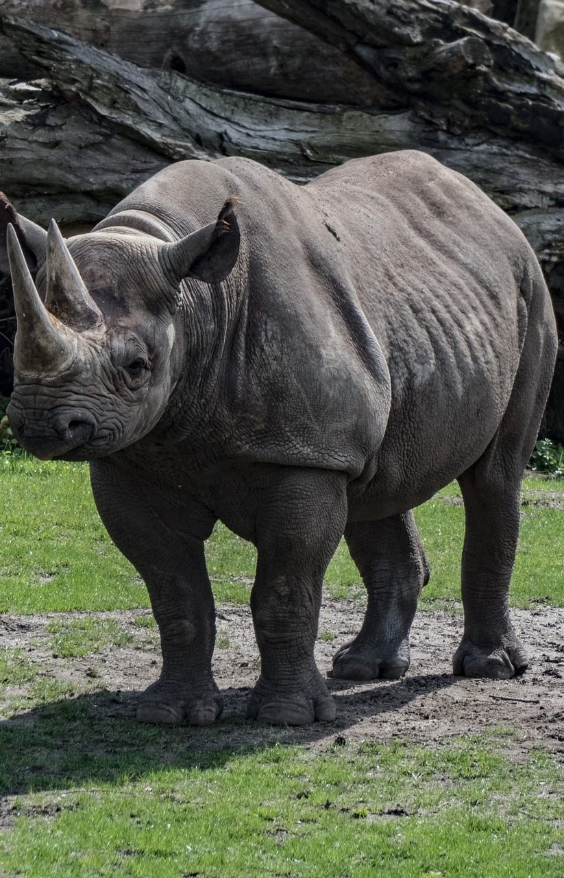 Picture of a rhino.