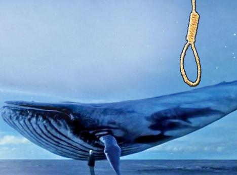 """""""الاتصالات"""": حجب """"الحوت الأزرق"""" بالكامل مستحيل.. ونجتهد بقوة لمواجهة اللعبة"""
