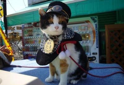 kucing hoki keberuntungan jepang