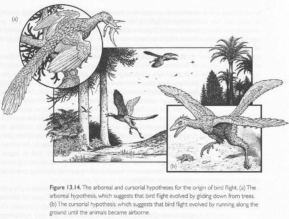 AGATHAUMAS: Archaeopteryx lithographica 1861-2011