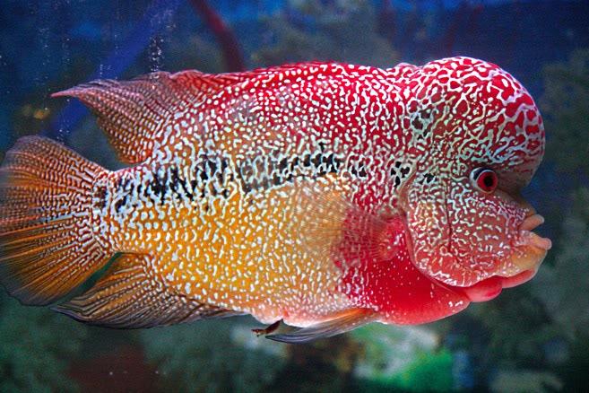 Adaptasi Fisiologi Hewan Yg Hidup Di Air Laut Dan Air Tawar Adaptasi Fisiologi Ikan Yg Hidup Di Air Tawar Dan Di Laut
