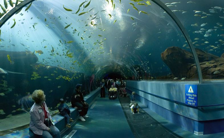 All about: Aquarium