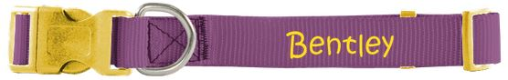Purple and yellow collar from PrideBites with Bentley monogrammed