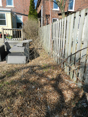 The Junction Spring Backyard Garden Cleanup Before by Paul Jung Gardening Services a Toronto Gardening Company
