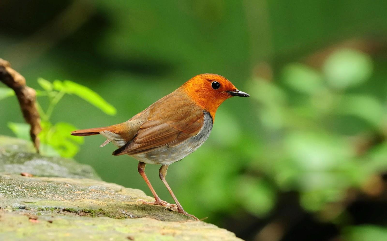 Our Beautiful World: Cute Birds