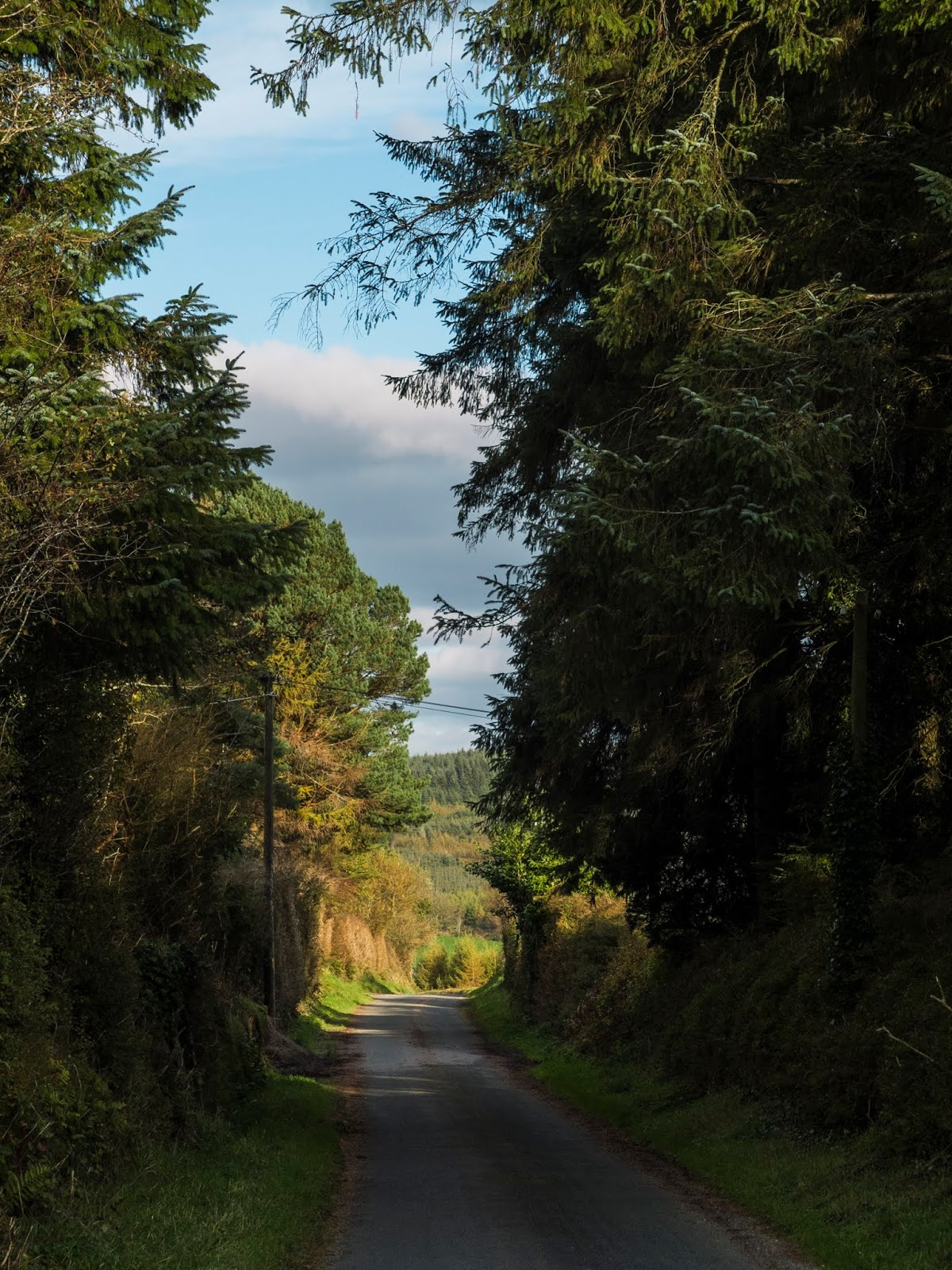 A countryside road in North Cork going from the shadows into sunlight.