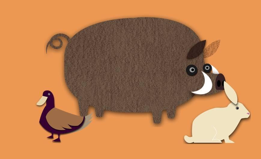 Ciencias Culinarias: ANIMALES DE CAZA