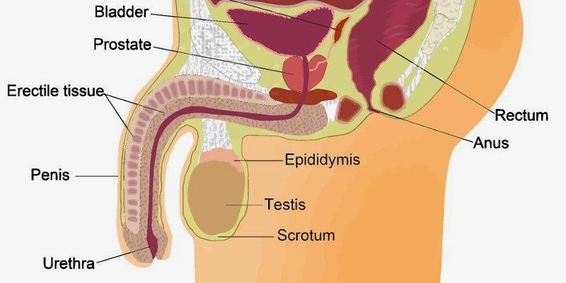 prostata ingrossata o tumore)