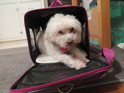 Phoebe won't be joining me on my trip with Bayer Animal Health to visit K9's for Warriors