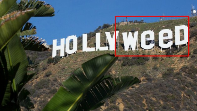 What's wrong with Hollyweed