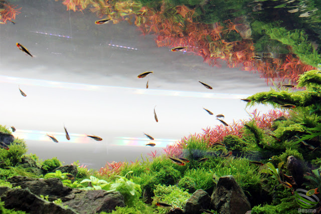 水草レイアウト水槽