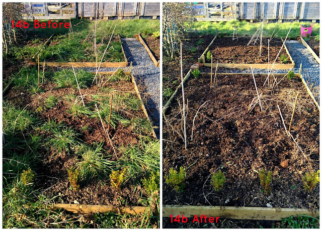Asparagus beds - growourown.blogspot.com ~ an allotment