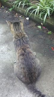 何かを見つめているキジトラ猫