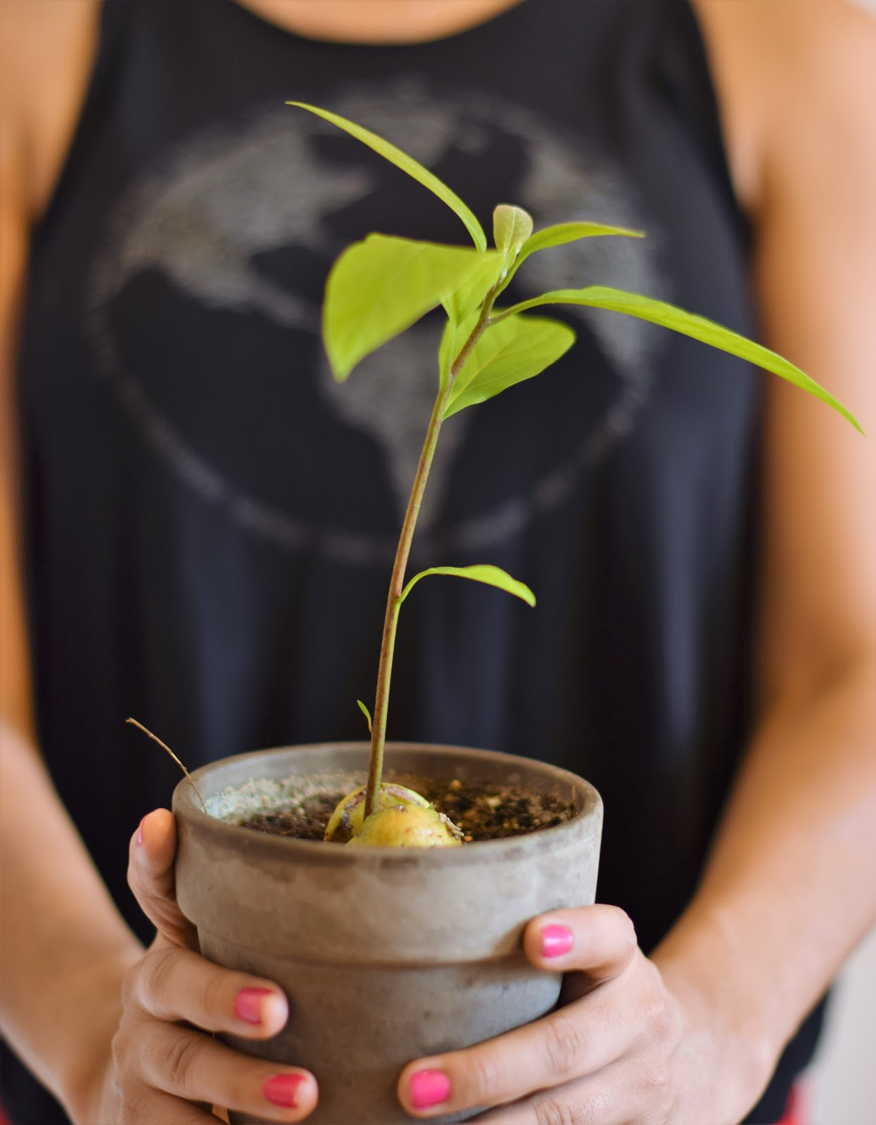 Testing a Tutorial: Growing a Plant from an Avocado Seed ...