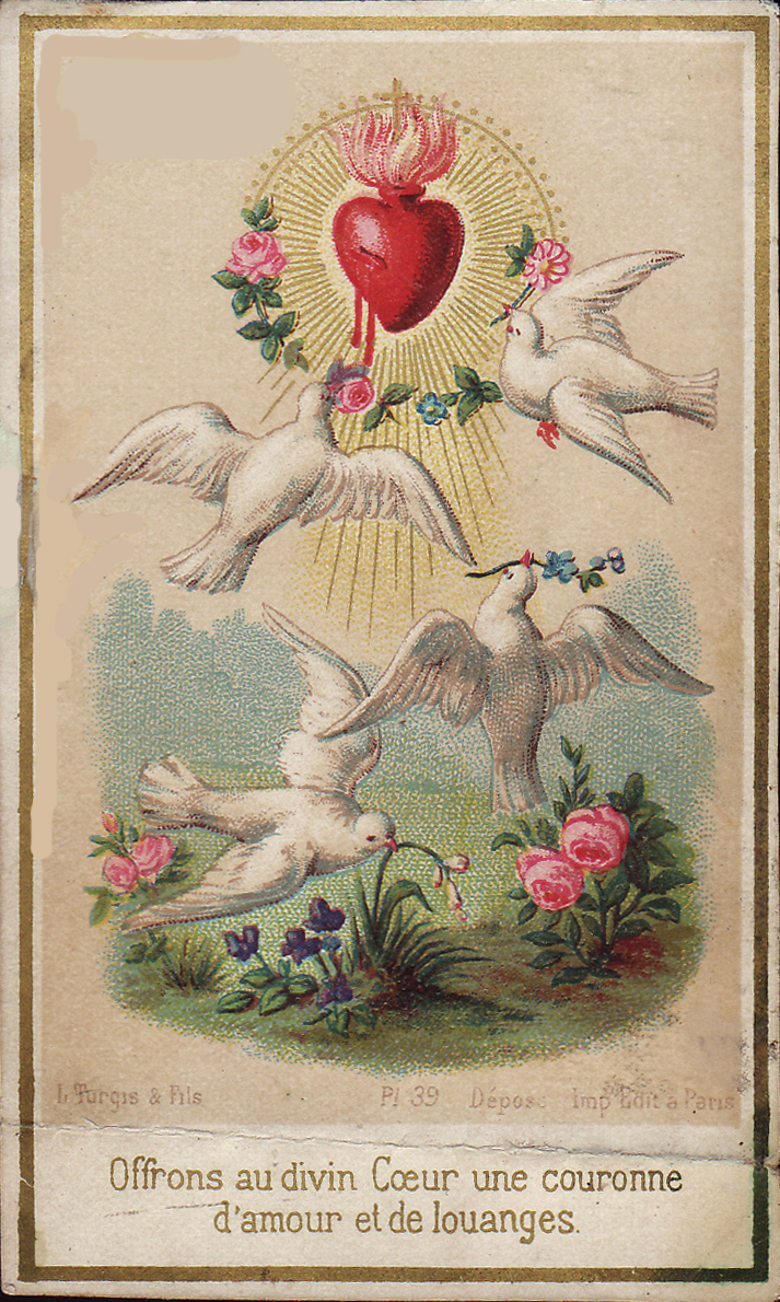 Nest Of The Doves