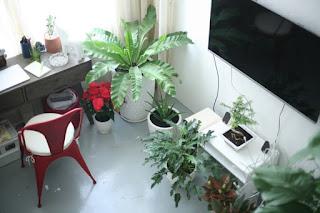 Cây cảnh nội thất cho nhà chung cư