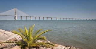 ما زال ثلث أطول الأنهار في العالم يتدفق بحرية