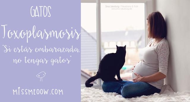 Toxoplasmosis ¿Una mujer embarazada no puede tener gatos?