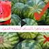 كيف تميز البطيخة الحمراء والحلوة بطريقة علمية - فيديو