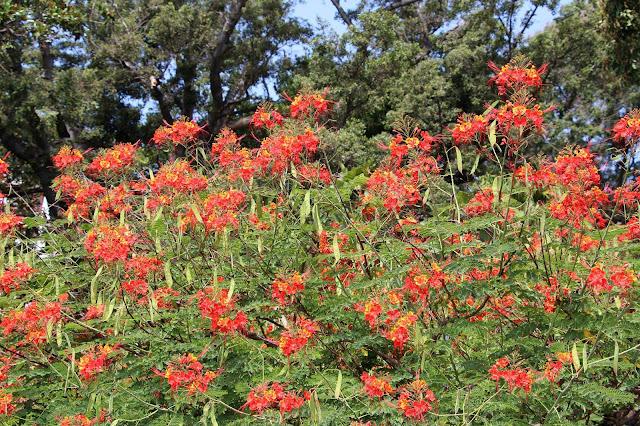 flowers in Quinta Vigia