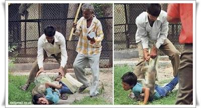 http://cnmbvc.blogspot.com/2017/03/inilah-monyet-pembunuh-di-india.html