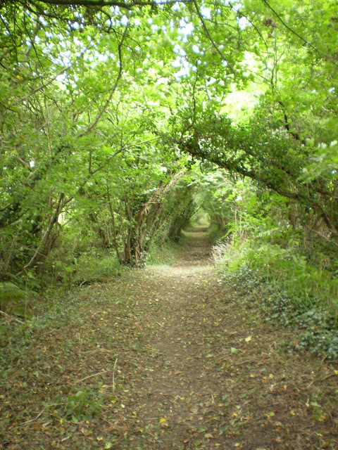 Footpath surrounded by foliage