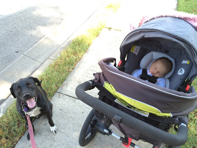 Start out slowly with walks in your early postpartum days!