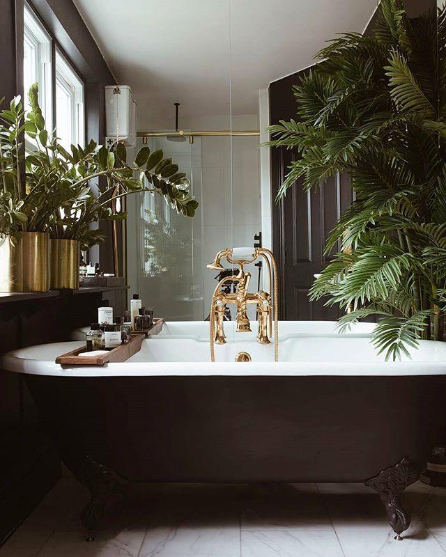 Magiczny świat Roślin 5 Roślin Idealnych Do Twojej łazienki