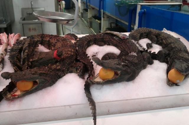 Tubarões e crocodilos são vendidos nos supermercados