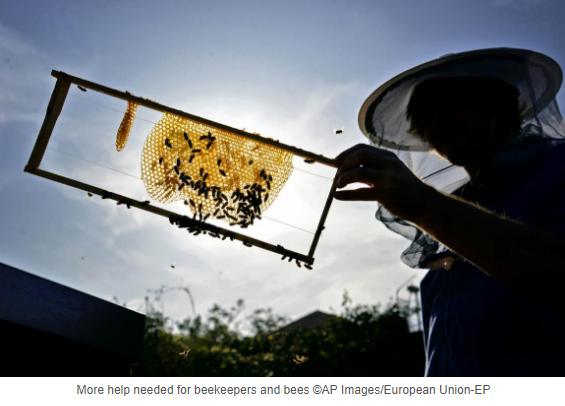 Ευρωπαϊκό Κοινοβούλιο: Η Μελισσοκομία στην Ε.Ε χρειάζεται επειγόντως στήριξη...Την ίδια ώρα που το Ελληνικό κράτος πολεμάει τους Έλληνες μελισσοκόμους