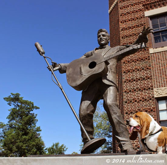 Bentley Basset Hound loved hanging out with Elvis statue