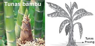 Pengertian Perkembangbiakan Vegetatif Buatan dan Alami