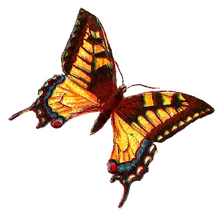 butterfly insect images graphics free clipart