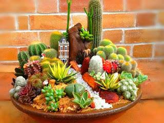jenis-jenis-kaktus-unik.jpg