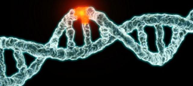 mutasyon nedir