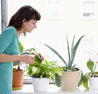 النباتات و الحساسية