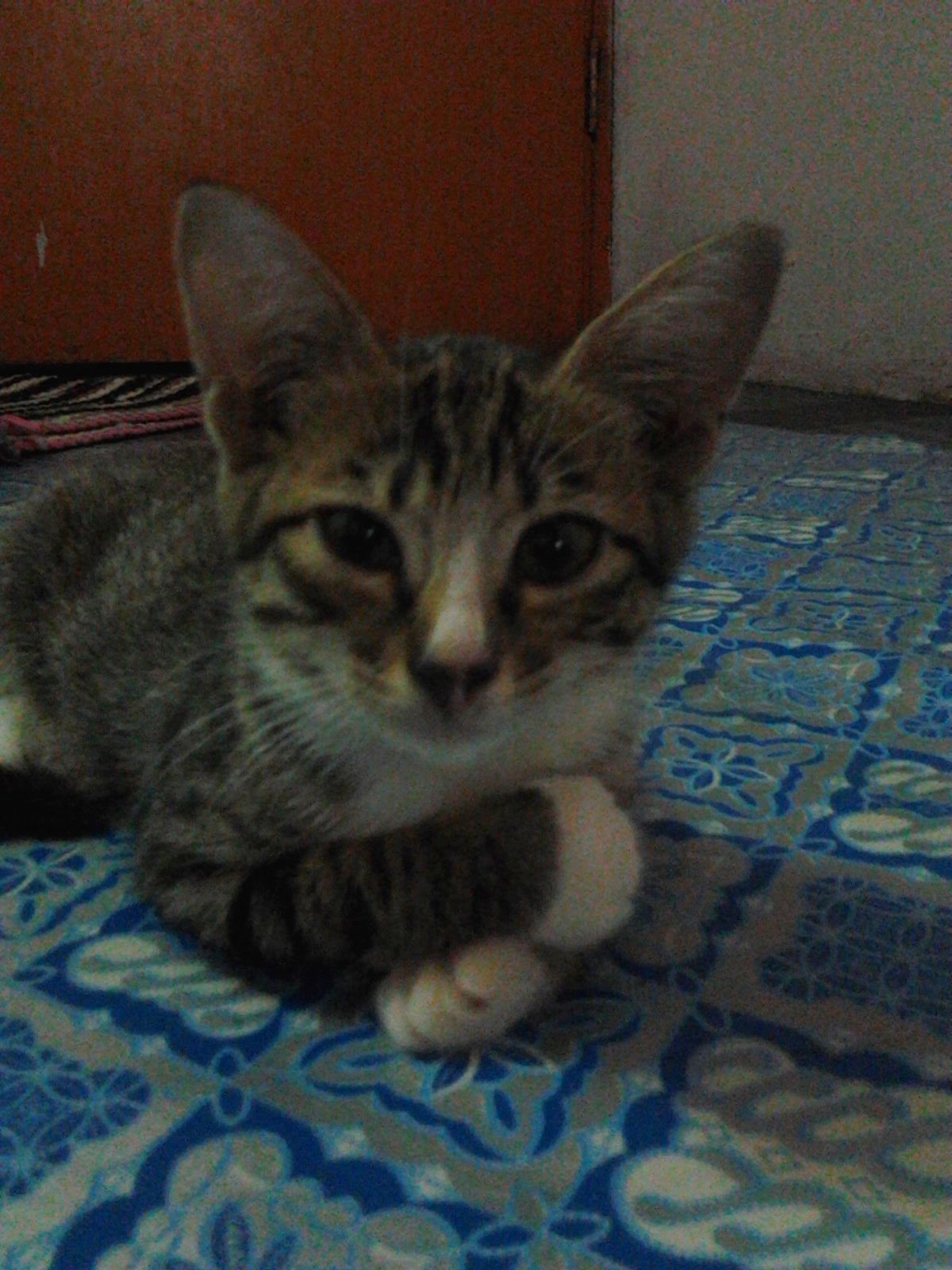 Ain Safiyyah Kucing comel