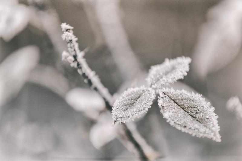 Kuura, frozen, talvi, suomi, Finland, winter, Visualaddict, valokuvaaja, Frida Steiner, kasvi, luonto, nature, naturephotography