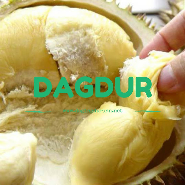 reseller-daging-durian-medan-legit-di-mempawah