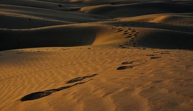 Food and Places to Visit in Jaisalmer - Golden City of India