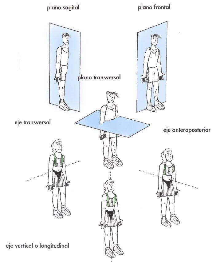 sistema esquelético humano : el sistema esquelético y la posición ...