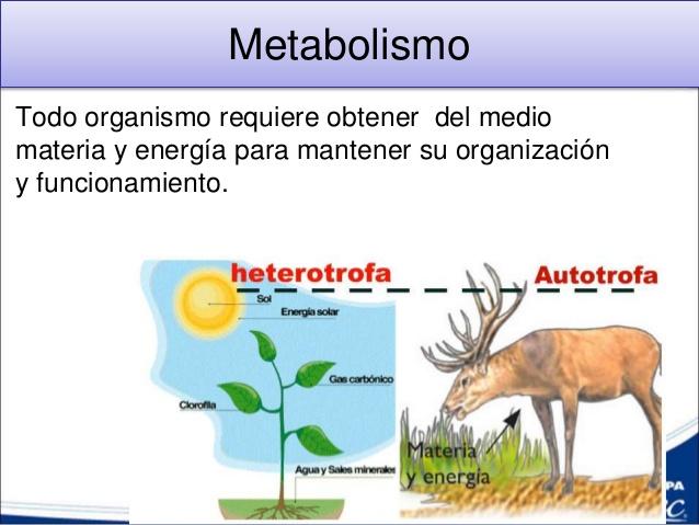 metabolismo de la galactosa cura