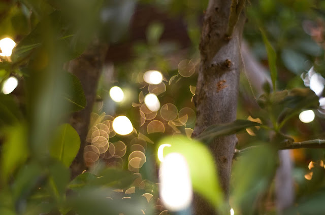 Blurry orbs of light through green trees