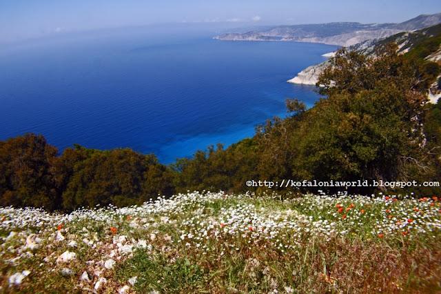 Spring flowers overlooking Myrtos, Kefalonia