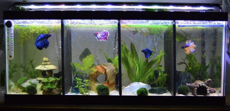 Photo Betta Fish Care Lighting