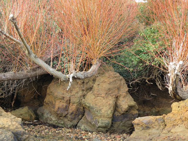 Closer to the rocks, branches and twigs