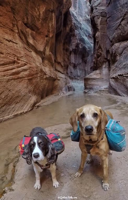 10 Tips for Backpacking Buckskin Gulch, Backpacking Buckskin Gulch with Dogs