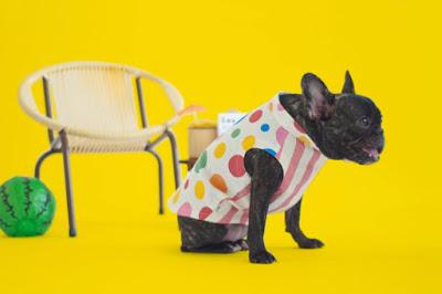 oblecek pro psa